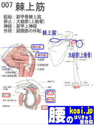 棘上筋、ぎっくり腰【腰痛専門】腰のはりきゅう整骨院、福岡太宰府