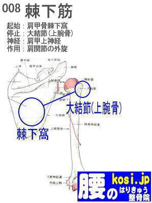 棘下筋、福岡太宰府、ぎっくり腰【腰痛専門】腰のはりきゅう整骨院