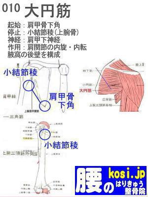 大円筋、ぎっくり腰【腰痛専門】腰のはりきゅう整骨院
