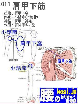 肩甲下筋、ぎっくり腰【腰痛専門】腰のはりきゅう整骨院
