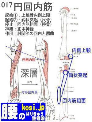 円回内筋、ぎっくり腰【腰痛専門】腰のはりきゅう整骨院、福岡太宰府