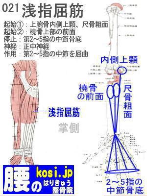 浅指屈筋、ぎっくり腰【腰痛専門】腰のはりきゅう整骨院、福岡太宰府
