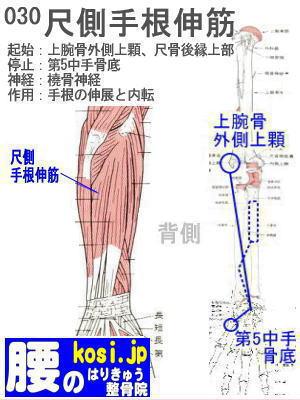 尺側手根伸筋、ぎっくり腰【腰痛専門】腰のはりきゅう整骨院