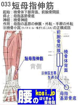 短母指伸筋(手)、ぎっくり腰【腰痛専門】腰のはりきゅう整骨院