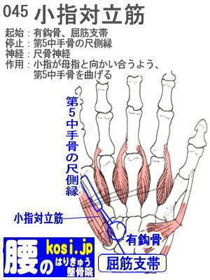 小指対立筋(手)、咬筋、ぎっくり腰【腰痛専門】腰のはりきゅう整骨院