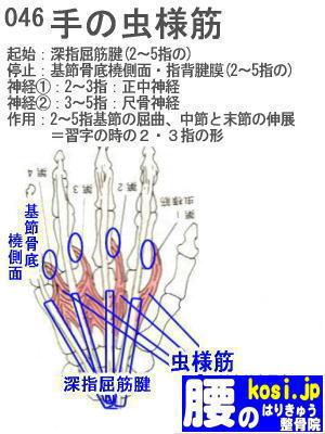 虫様筋(手)、ぎっくり腰【腰痛専門】腰のはりきゅう整骨院