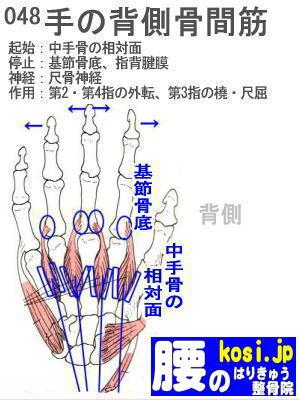 背側骨間筋(手)、ぎっくり腰【腰痛専門】腰のはりきゅう整骨院