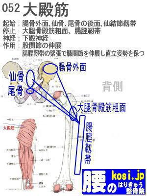 大殿筋、ぎっくり腰【腰痛専門】腰のはりきゅう整骨院