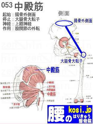 中殿筋、ぎっくり腰【腰痛専門】腰のはりきゅう整骨院