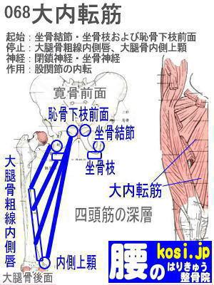 大内転筋、ぎっくり腰【腰痛専門】腰のはりきゅう整骨院