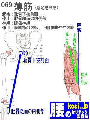 薄筋、ぎっくり腰【腰痛専門】腰のはりきゅう整骨院