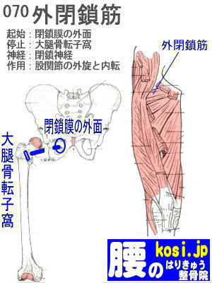 外閉鎖筋、ぎっくり腰【腰痛専門】腰のはりきゅう整骨院