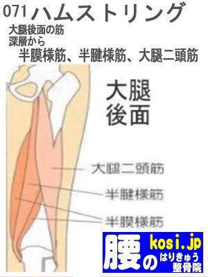 ハムストリング、ぎっくり腰【腰痛専門】腰のはりきゅう整骨院