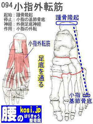 小指外転筋(足)、福岡太宰府、ぎっくり腰【腰痛専門】腰のはりきゅう整骨院