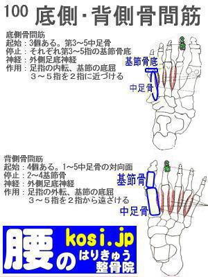 底側骨間筋・背側骨間筋、ぎっくり腰【腰痛専門】腰のはりきゅう整骨院