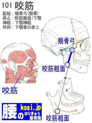 咬筋、ぎっくり腰【腰痛専門】腰のはりきゅう整骨院