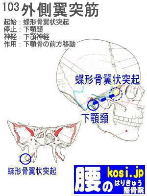 外側翼突筋、ぎっくり腰【腰痛専門】腰のはりきゅう整骨院