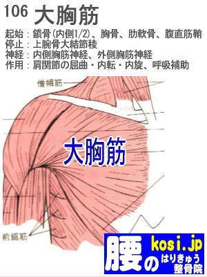 大胸筋、ぎっくり腰【腰痛専門】腰のはりきゅう整骨院