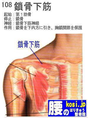 鎖骨下筋、ぎっくり腰【腰痛専門】腰のはりきゅう整骨院
