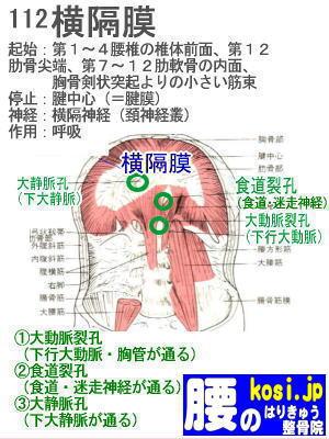 横隔膜、ぎっくり腰【腰痛専門】腰のはりきゅう整骨院