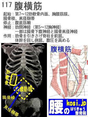 腹横筋、福岡太宰府、ぎっくり腰【腰痛専門】腰のはりきゅう整骨院