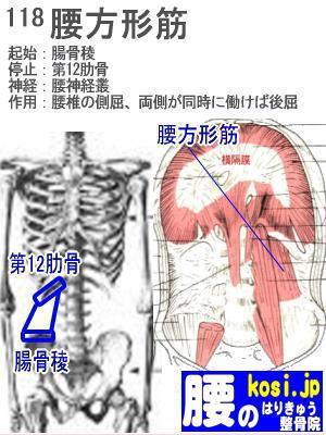 腰方形筋、ぎっくり腰【腰痛専門】腰のはりきゅう整骨院、福岡太宰府