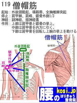 僧帽筋、ぎっくり腰【腰痛専門】腰のはりきゅう整骨院