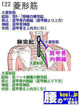 小・大菱形筋、ぎっくり腰【腰痛専門】腰のはりきゅう整骨院