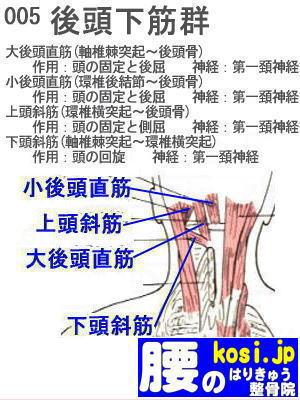 後頭下筋群、福岡 太宰府、ぎっくり腰【腰痛専門】こしの鍼灸整骨院