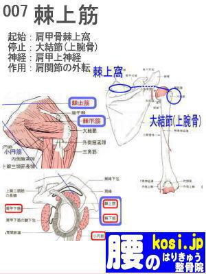 棘上筋、福岡 太宰府、ぎっくり腰【腰痛専門】こしの鍼灸整骨院