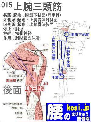 上腕三頭筋、ぎっくり腰【腰痛専門】腰のはりきゅう整骨院、福岡太宰府
