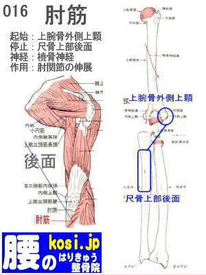 肘筋、福岡 太宰府、ぎっくり腰【腰痛専門】こしの鍼灸整骨院