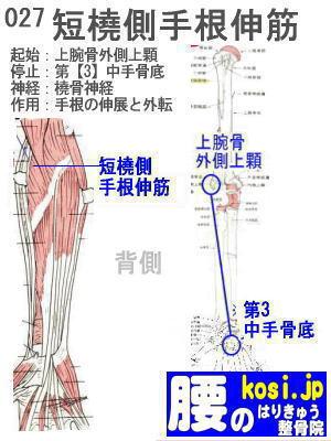 短橈側手根伸筋、ぎっくり腰【腰痛専門】腰のはりきゅう整骨院、福岡太宰府