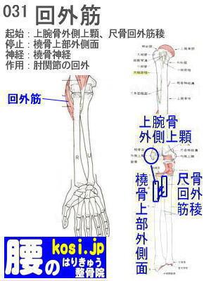 回外筋、ぎっくり腰【腰痛専門】腰のはりきゅう整骨院、福岡太宰府