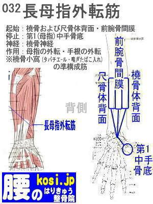 長母指外転筋、福岡 太宰府、ぎっくり腰【腰痛専門】こしの鍼灸整骨院