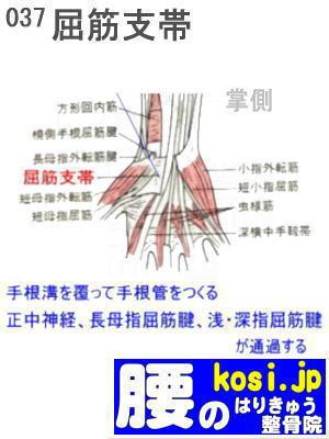 屈筋支帯、福岡 太宰府、ぎっくり腰【腰痛専門】こしの鍼灸整骨院