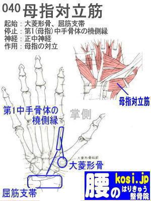 母指対立筋、福岡 太宰府、ぎっくり腰【腰痛専門】こしの鍼灸整骨院