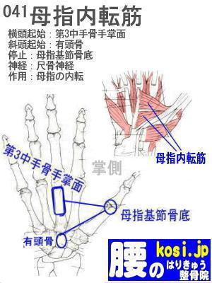 母指内転筋(手)、福岡太宰府、ぎっくり腰【腰痛専門】腰のはりきゅう整骨院
