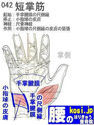 短掌筋、福岡太宰府、ぎっくり腰【腰痛専門】腰のはりきゅう整骨院