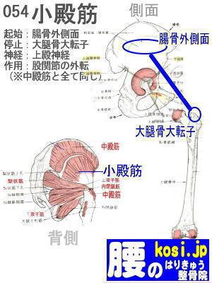 小殿筋、、福岡太宰府ぎっくり腰【腰痛専門】腰のはりきゅう整骨院