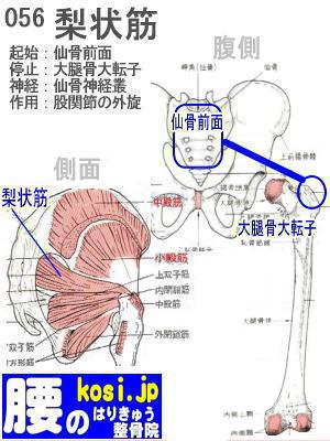 梨状筋、福岡 太宰府、ぎっくり腰【腰痛専門】こしの鍼灸整骨院