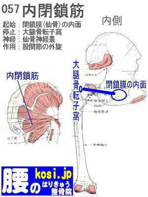 内閉鎖筋、ぎっくり腰【腰痛専門】腰のはりきゅう整骨院、福岡太宰府