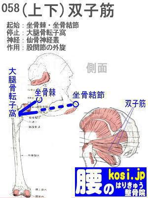 下双子筋、福岡 太宰府、ぎっくり腰【腰痛専門】こしの鍼灸整骨院
