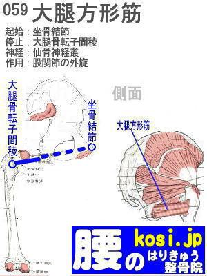 大腿方形筋、ぎっくり腰【腰痛専門】腰のはりきゅう整骨院、福岡太宰府