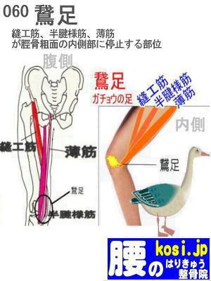 鵞足、福岡 太宰府、ぎっくり腰【腰痛専門】こしの鍼灸整骨院