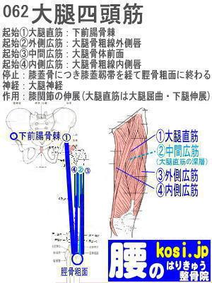 大腿四頭筋、福岡 太宰府、ぎっくり腰【腰痛専門】こしの鍼灸整骨院