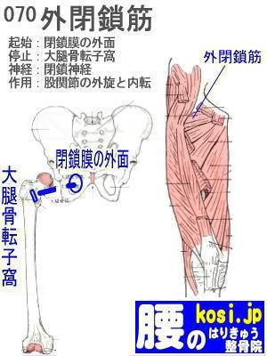 外閉鎖筋、福岡太宰府、ぎっくり腰【腰痛専門】腰のはりきゅう整骨院