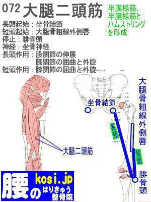 大腿二頭筋、ぎっくり腰【腰痛専門】腰のはりきゅう整骨院、福岡太宰府