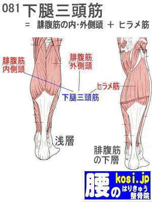 下腿三頭筋、福岡太宰府、ぎっくり腰【腰痛専門】腰のはりきゅう整骨院