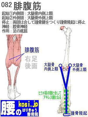 腓腹筋、福岡 太宰府、ぎっくり腰【腰痛専門】こしの鍼灸整骨院